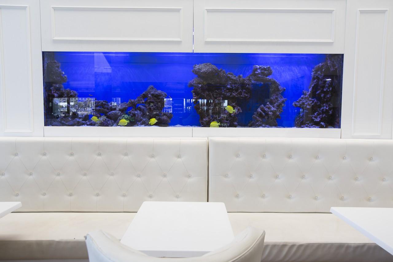 custom marine aquariums H31B2128 rentals
