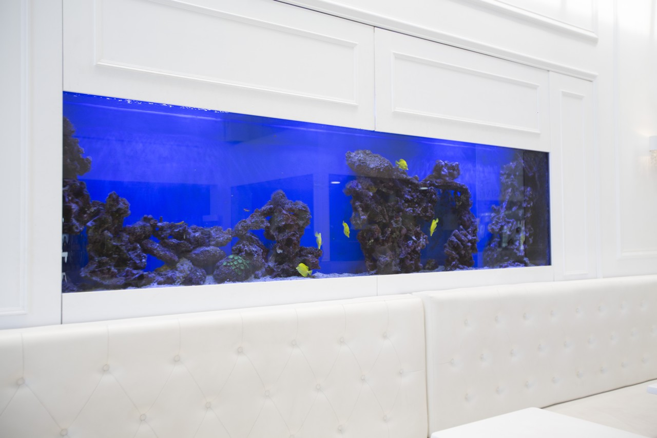 custom marine aquariums H31B2137rentals