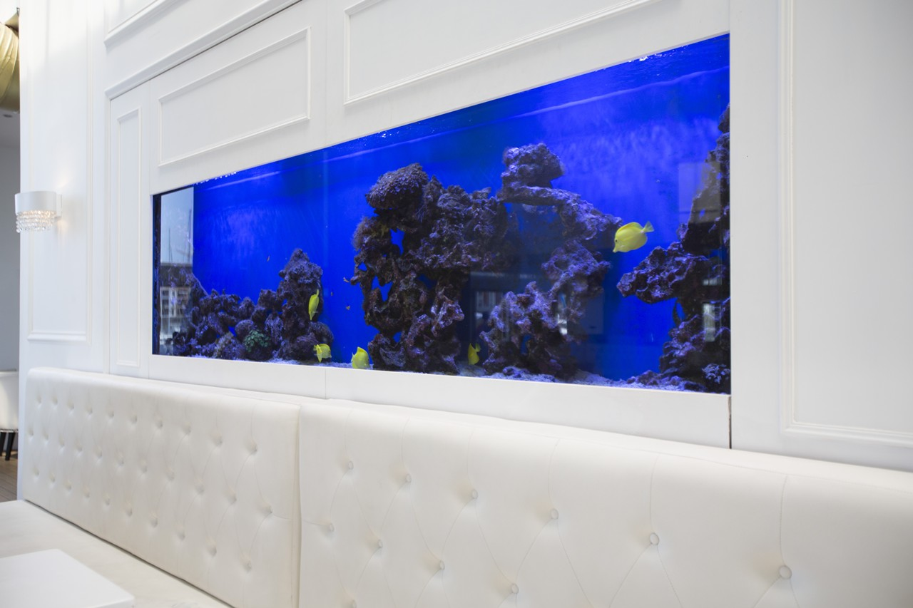 custom marine aquariums H31B2142rentals