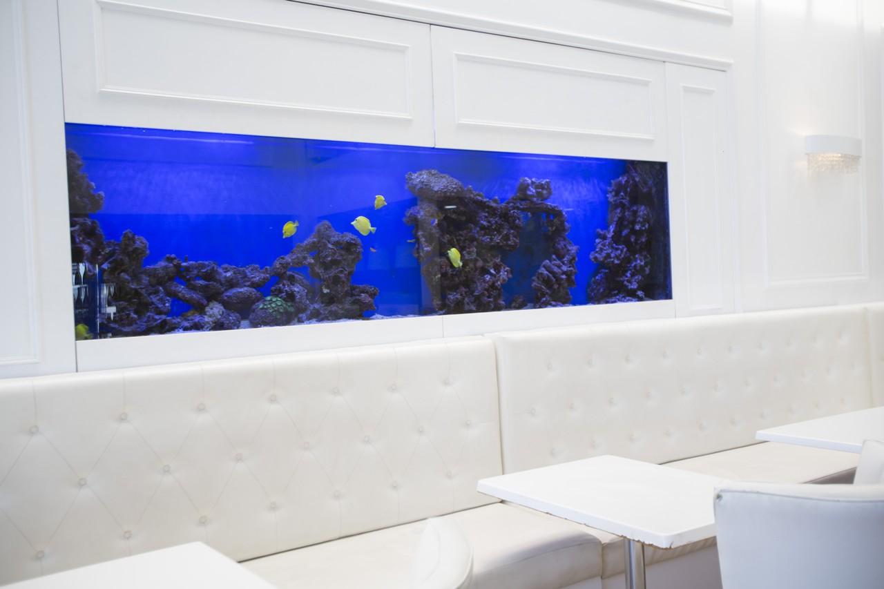 custom marine aquariums H31B2145 rentals