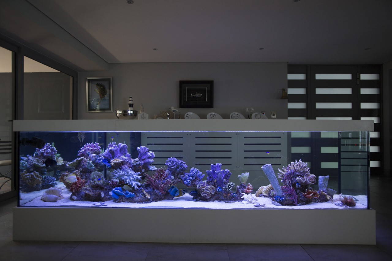 custom marine aquariums H31B2195rentals
