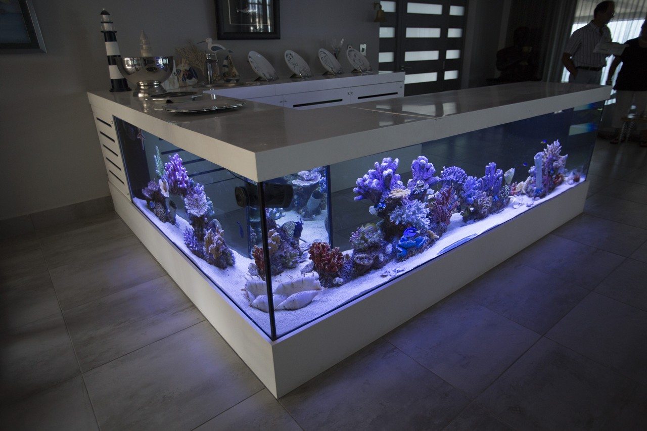 custom marine aquariums H31B220 rentals