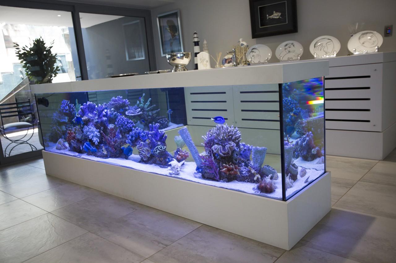 custom marine aquariums H31B2204 rentals