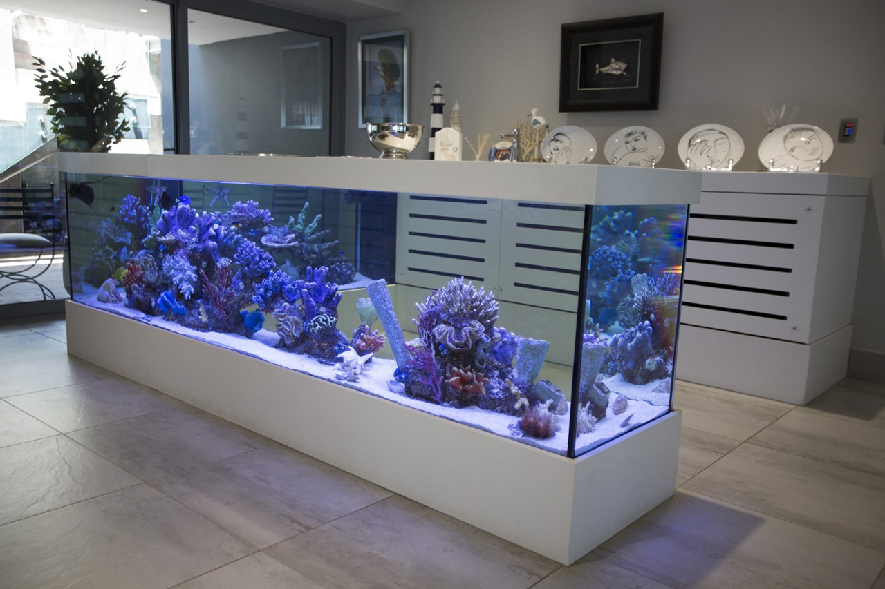 custom marine aquariums H31B2227 rentals