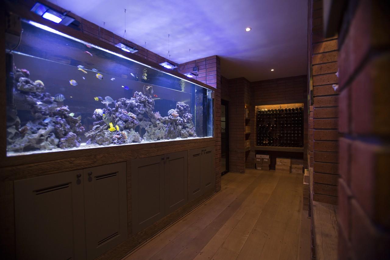 custom marine aquariums H31B2345 rentals
